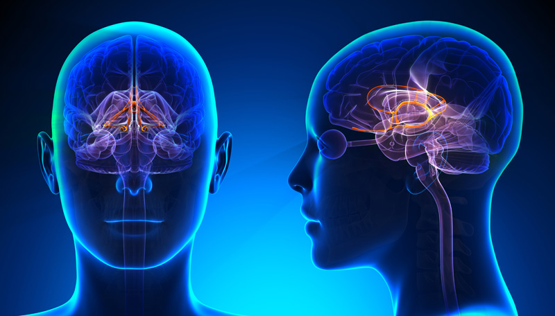 nervoussystemandbrain
